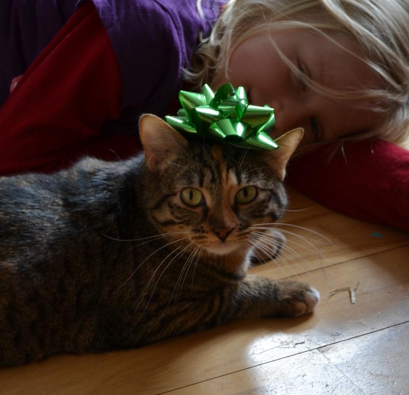 Christmas 2014 - kitty present