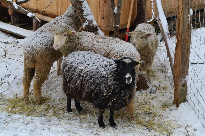 January 2015 - snowing 3