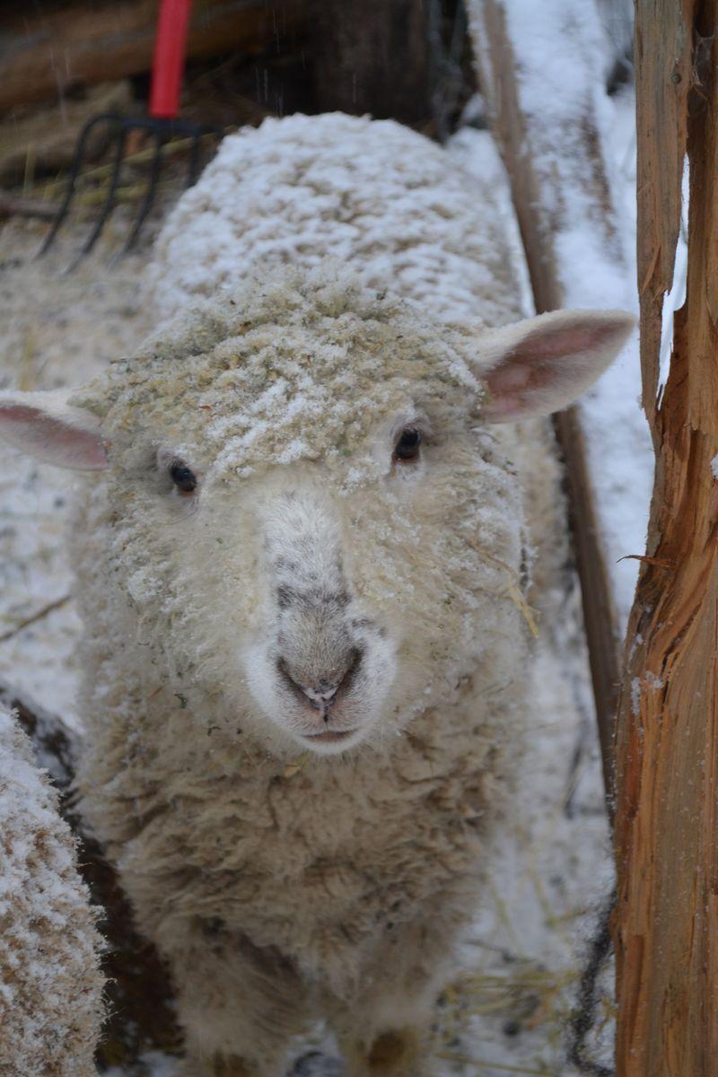 January 2015 - snowing 6