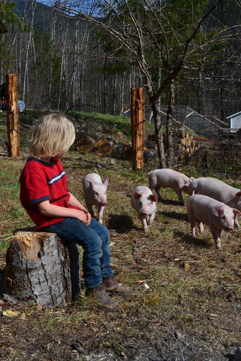 April 2015 - pigs 8 wks 7
