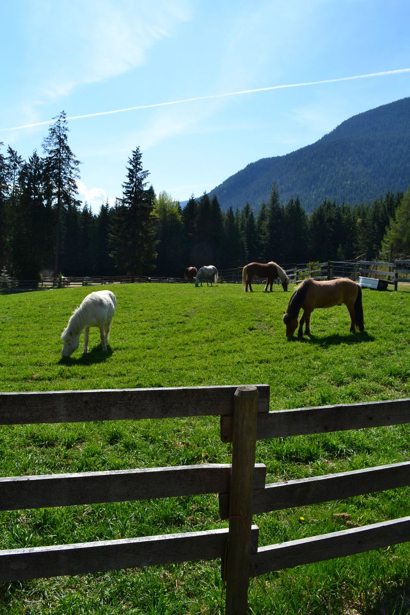 April 2015 - first day at horse lessons 7