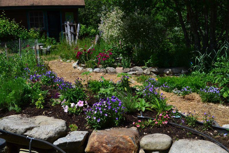 June 16, 2015 - kitchen garden 8