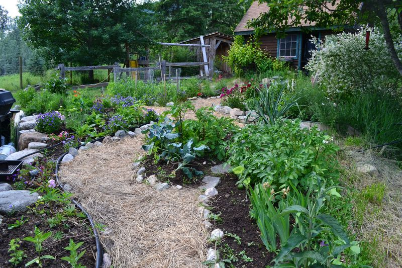 June 16, 2015 - kitchen garden 1