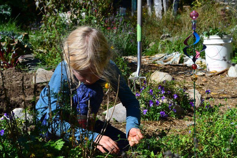 September 2015 - garden girl