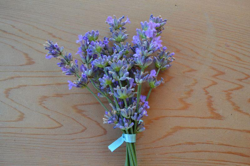July 2015 - lavender 4