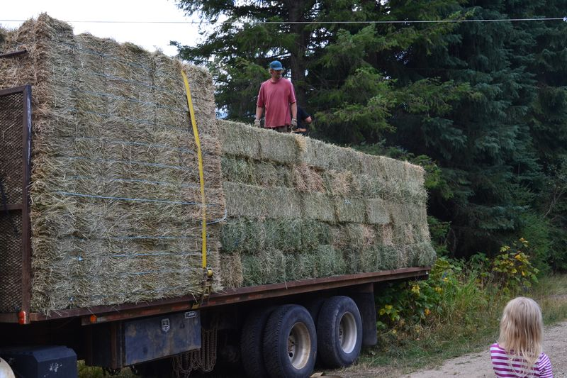 August 2015 - first hay days 1
