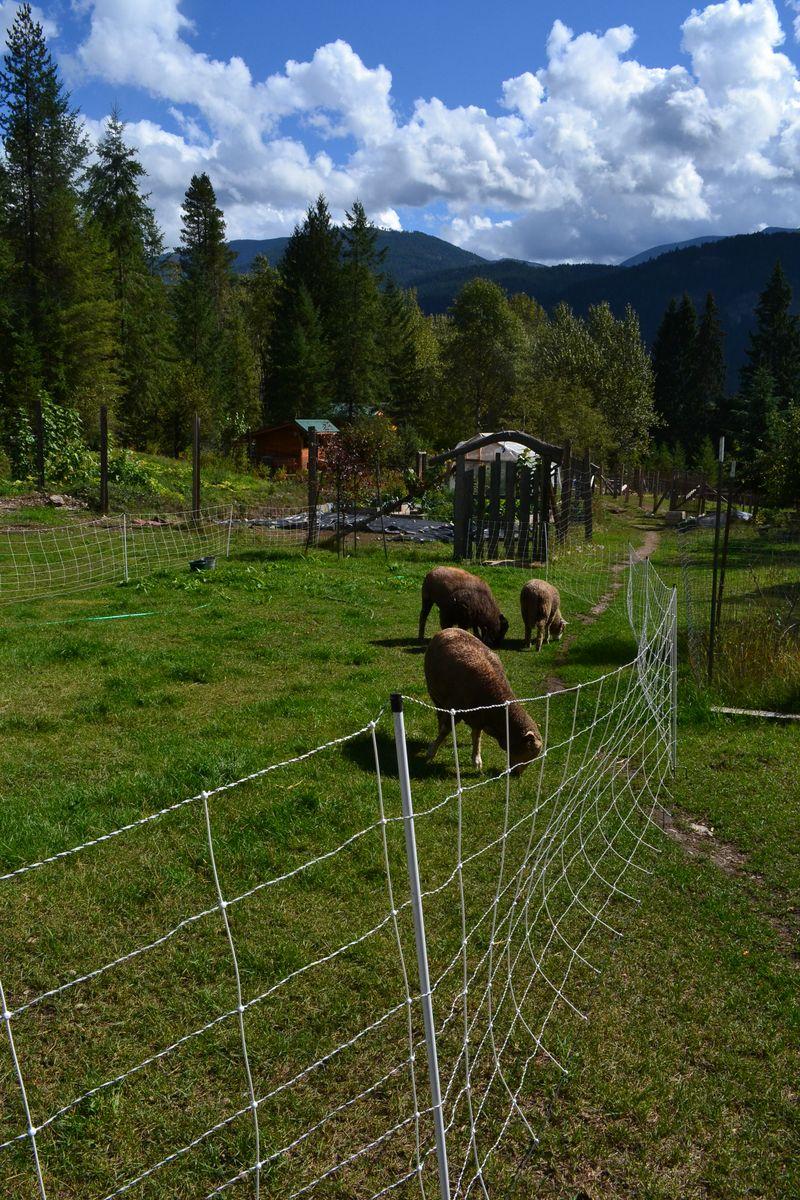 September 2015 - girls on pasture 1