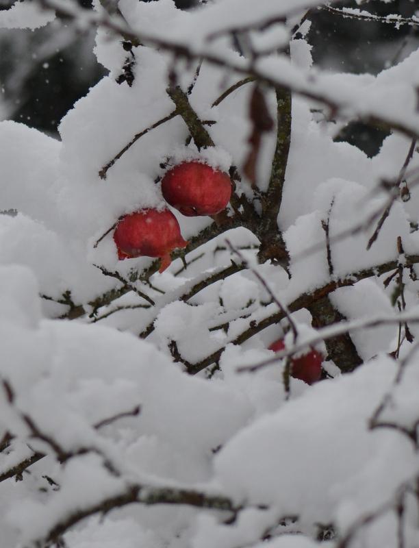 November 2015 - first snowfall 9